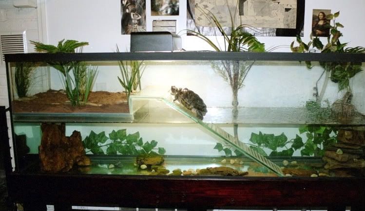 The New Turtle Tub Experience - Herpetologist Approved